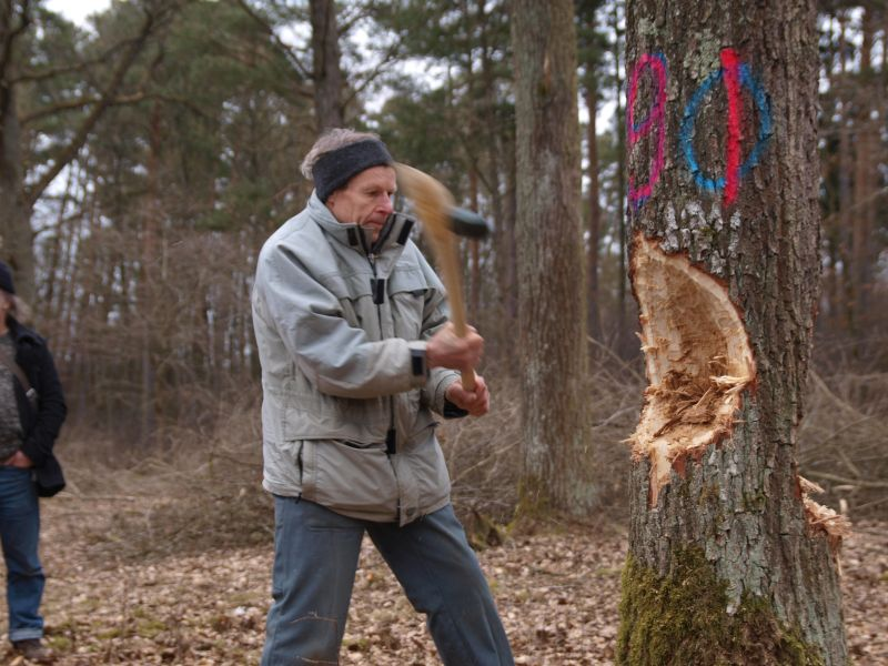 Felling with a Flügelholm axe